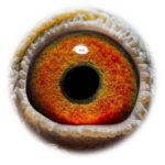NL15-1347200_eye