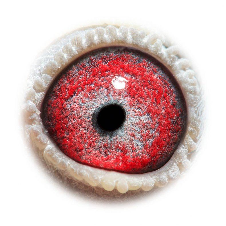 NL17-1732504_eye