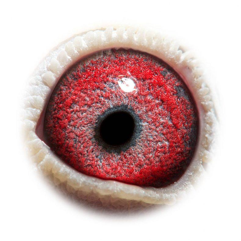 NL17-1732519_eye
