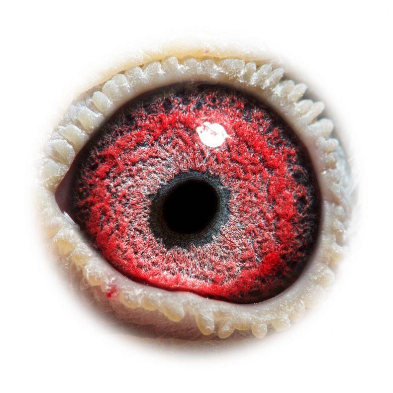 NL17-1732525_eye