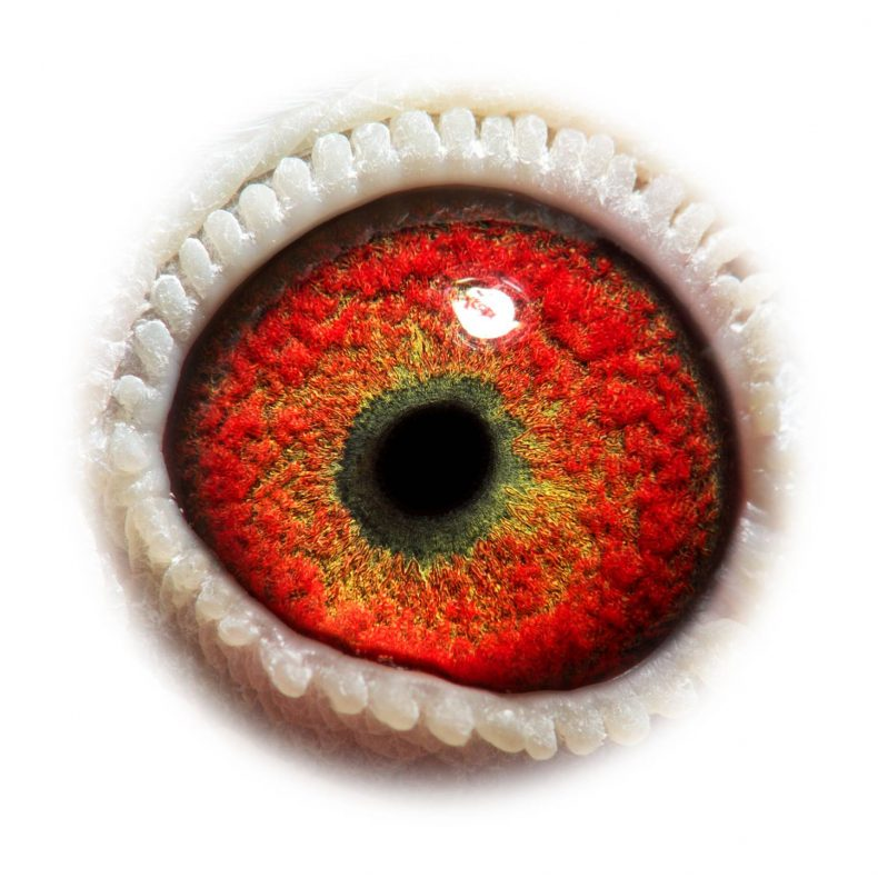 NL17-1732530_eye