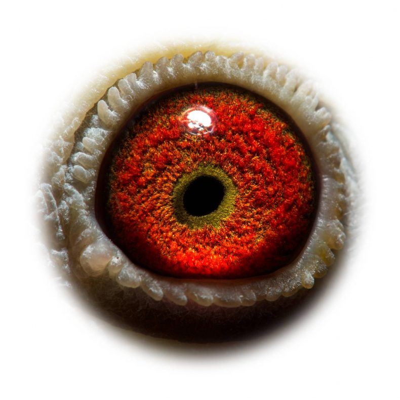 NL17-1732543_eye
