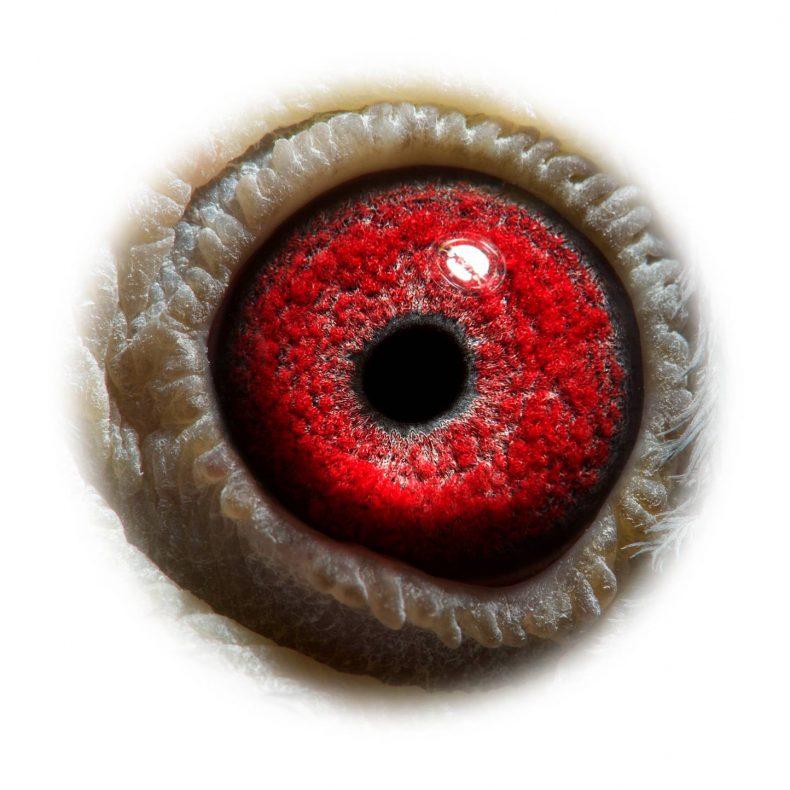 NL17-1732572_eye