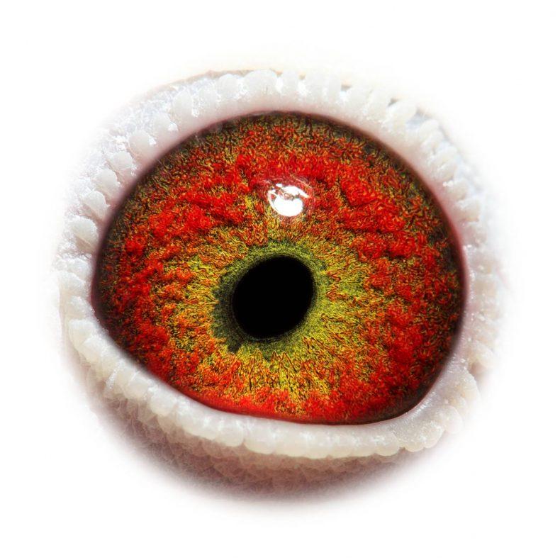 NL17-1732734_eye
