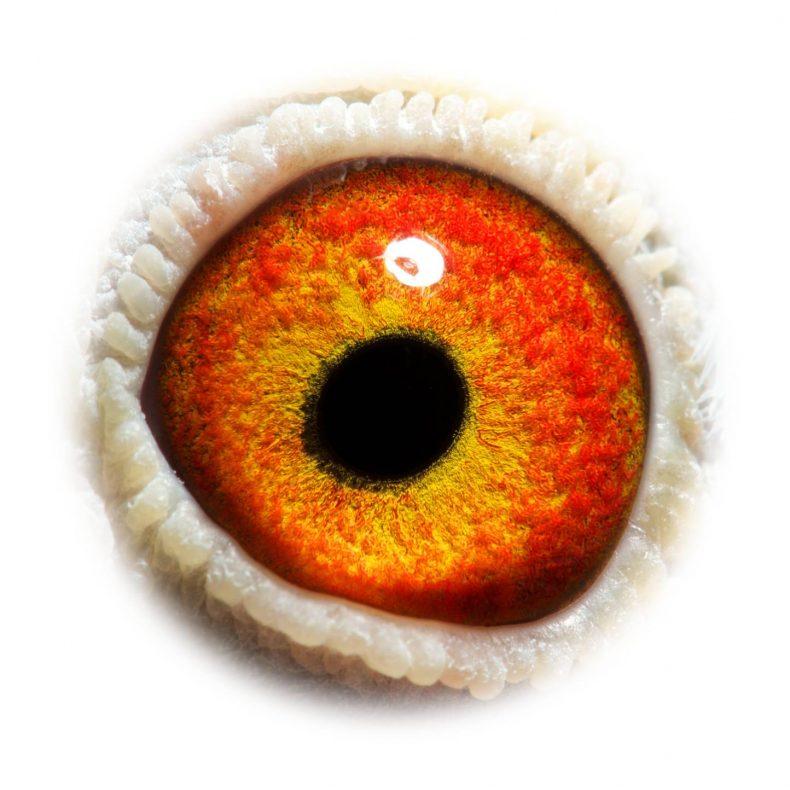 NL18-1542402_eye