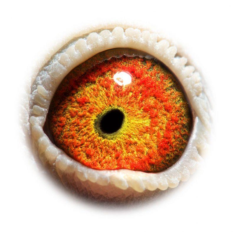 NL18-1542404_eye