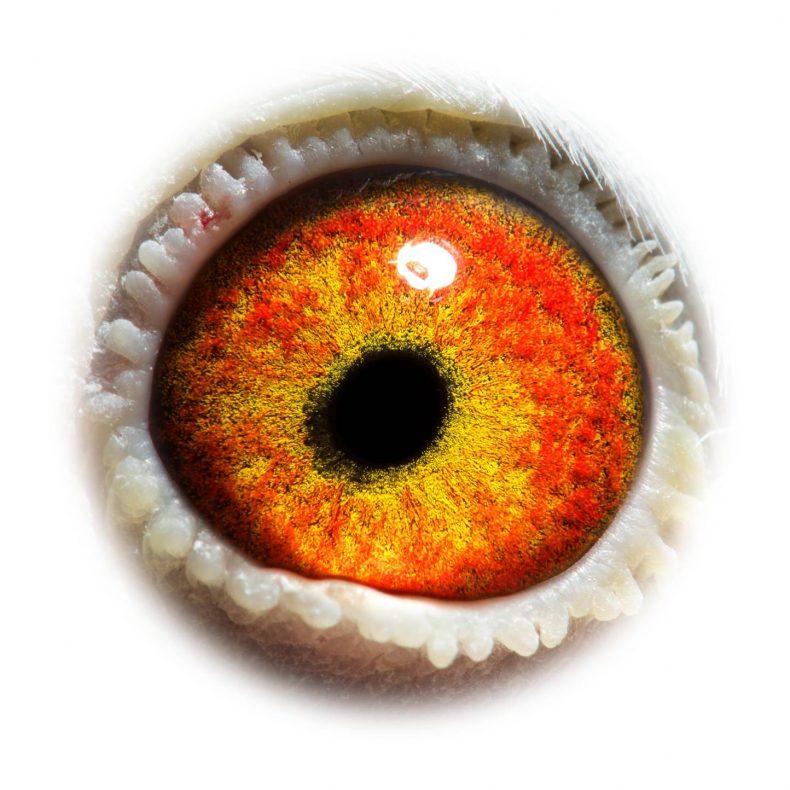 NL18-1542422_eye