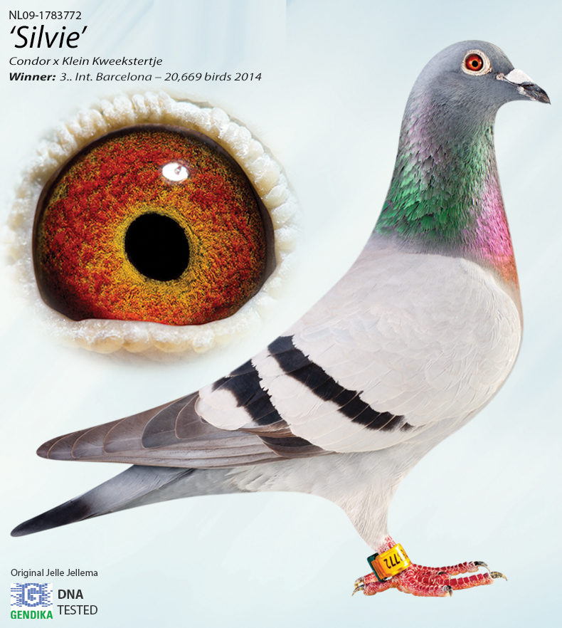 silvie-MAIN