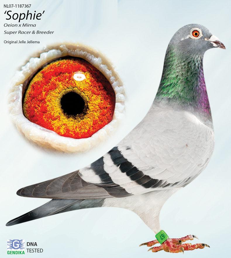 sophie-MAIN