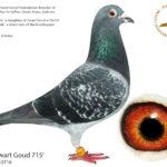 Son-Zwart-Goud-715