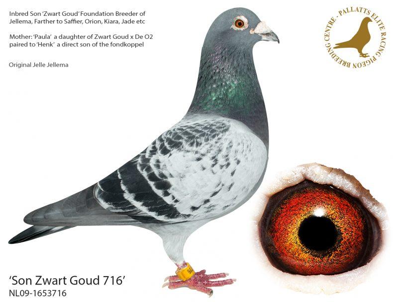 Son-Zwart-Goud-716