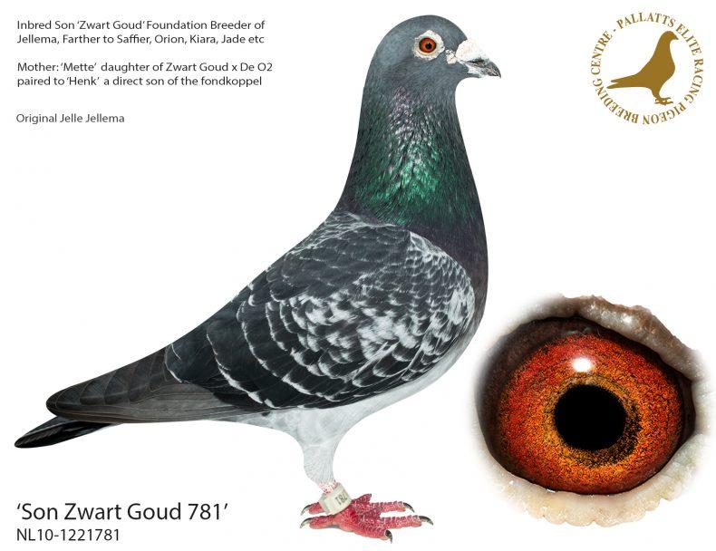 Son-Zwart-Goud-781