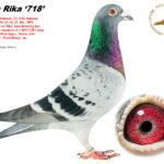 rika-718