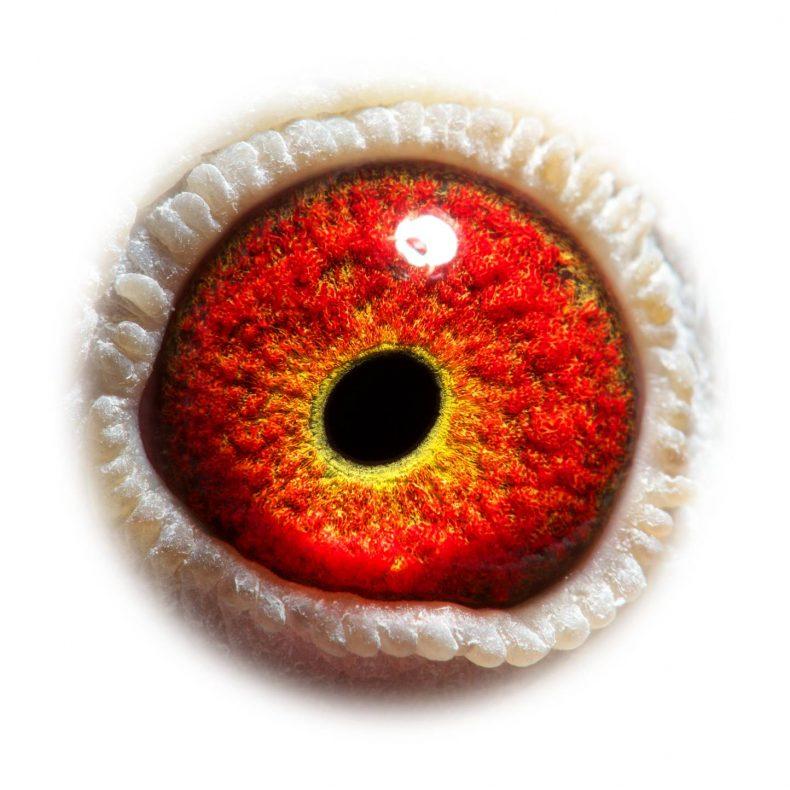 son-saar-NL18-5175451_eye