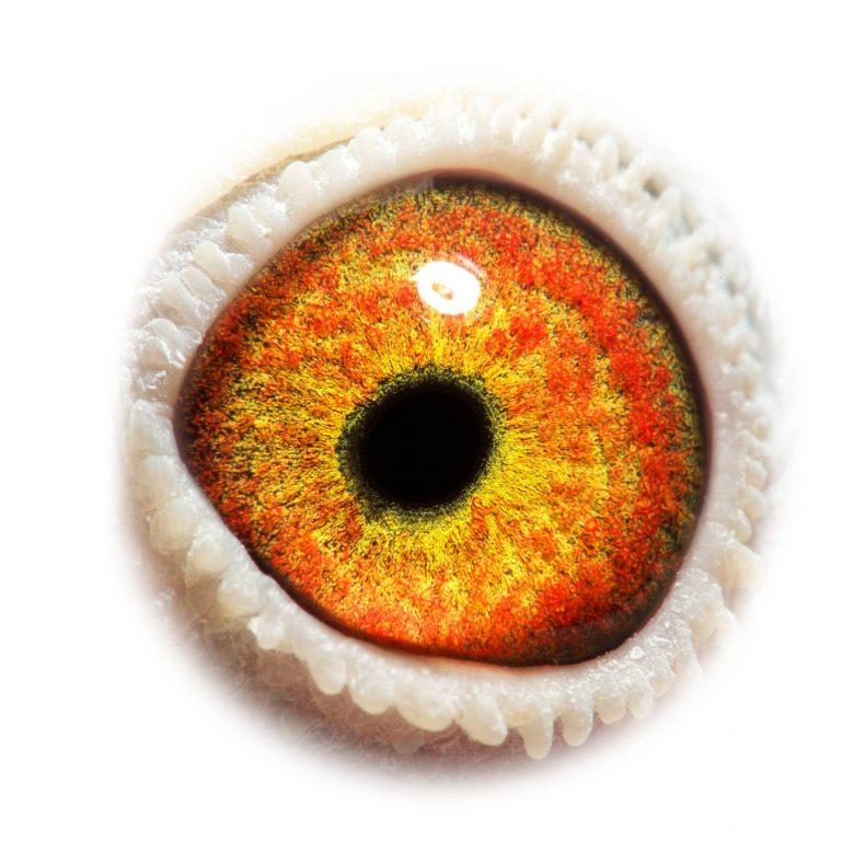 NL18-1542196_eye