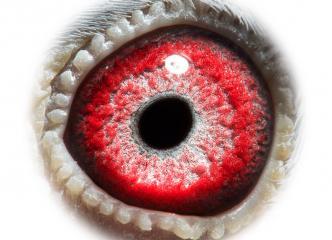 NL18-1542210_eye