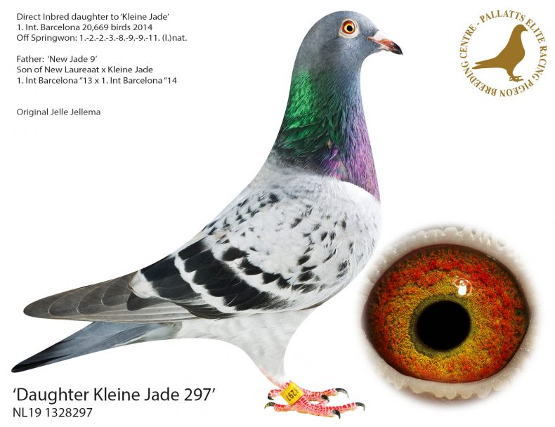 NL19-1328297
