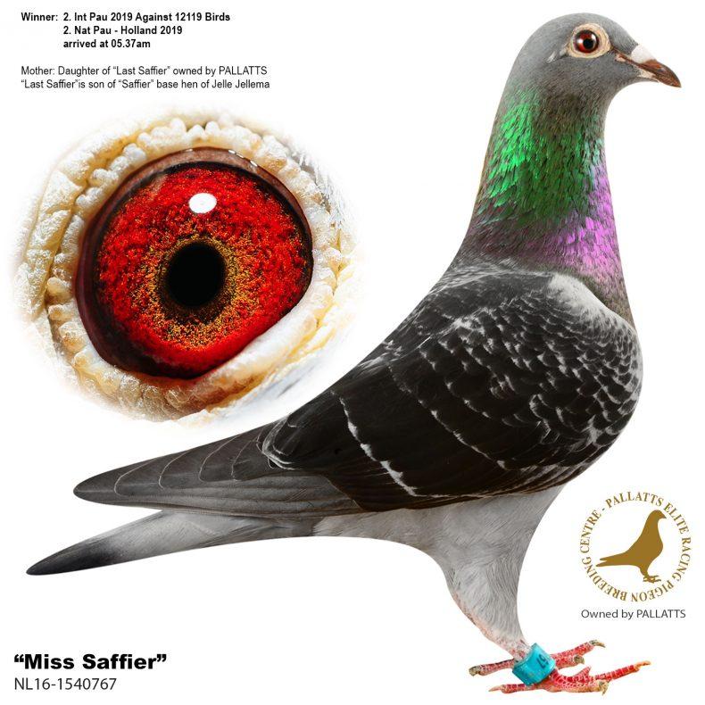 miss-saffier2