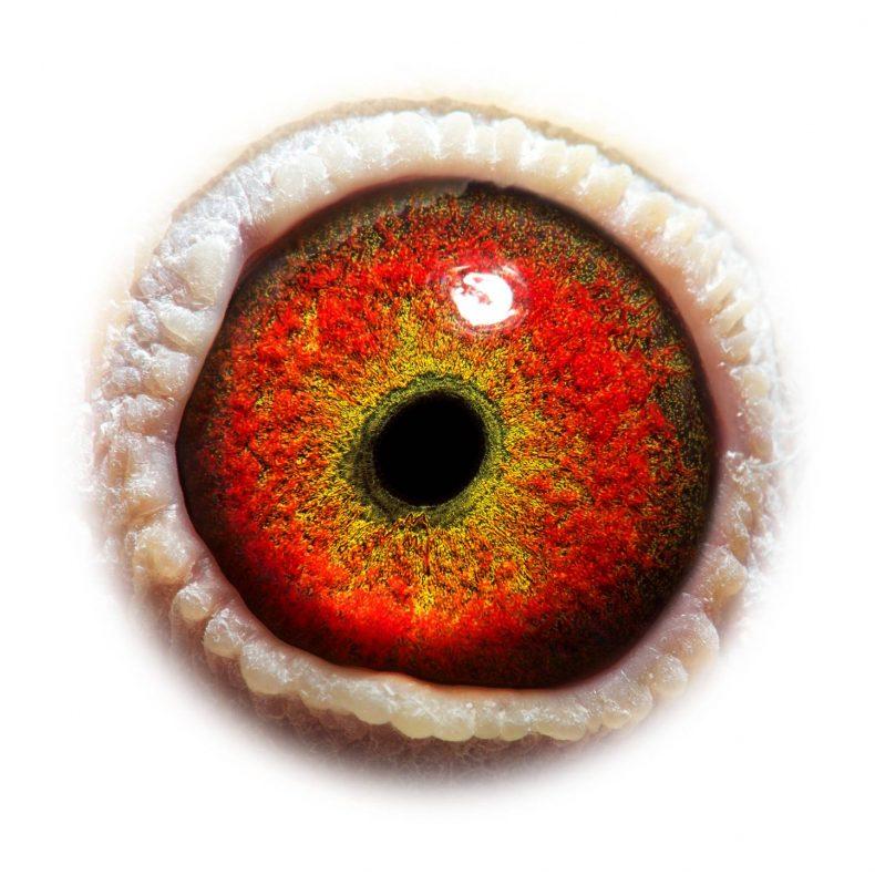 NL17-1732501_eye
