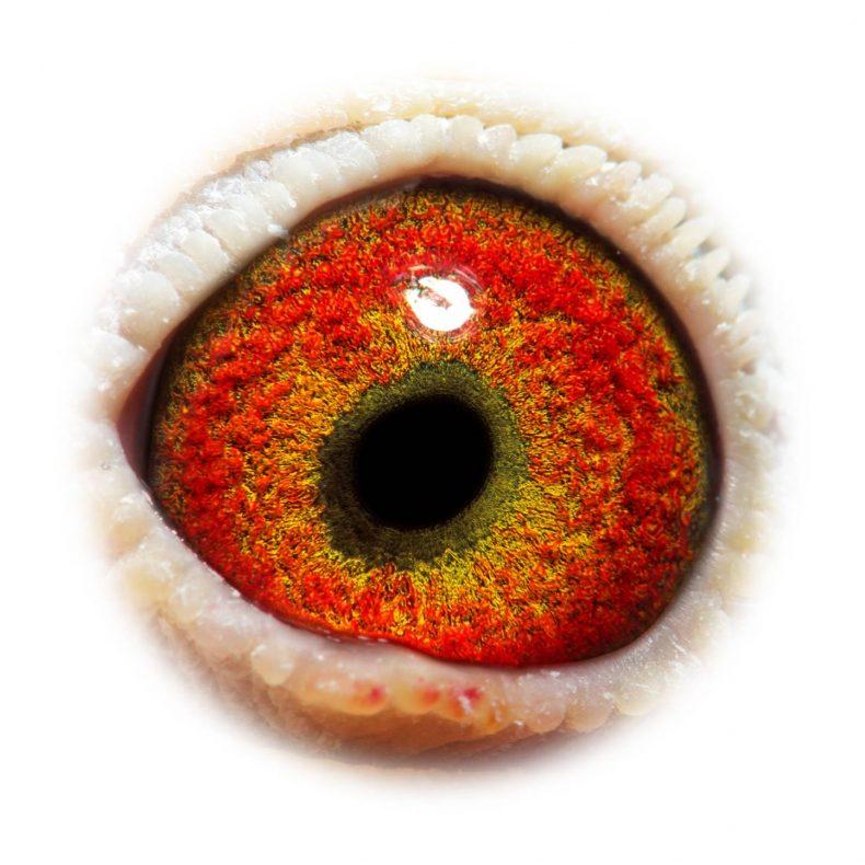 NL17-1732502_eye