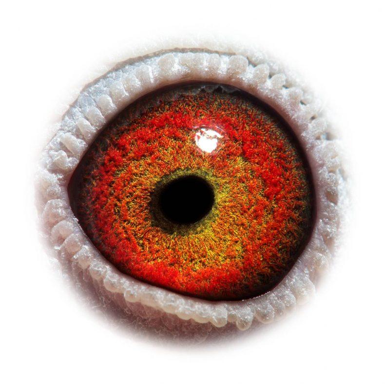 NL17-1732507_eye