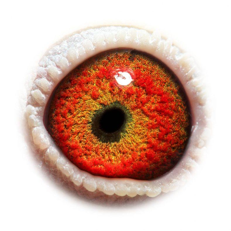 NL17-1732512_eye