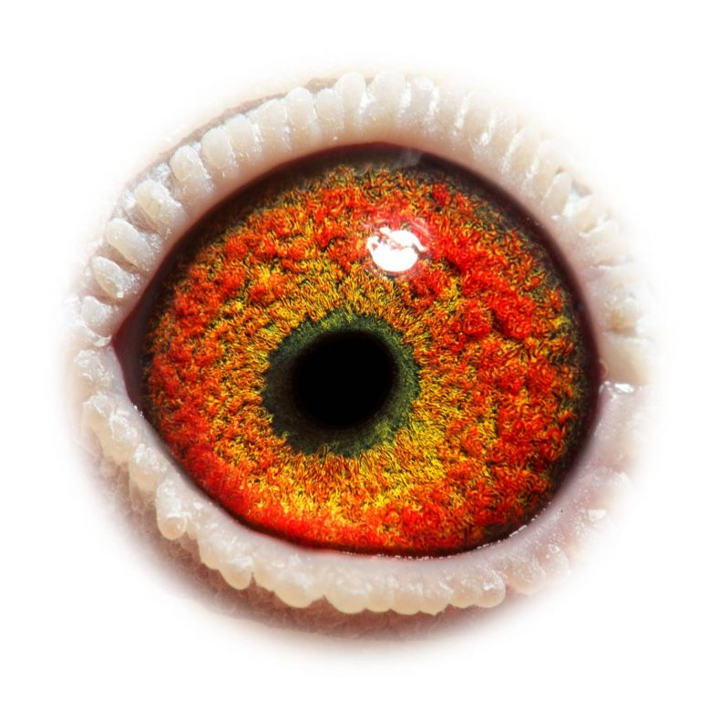 NL17-1732520_eye