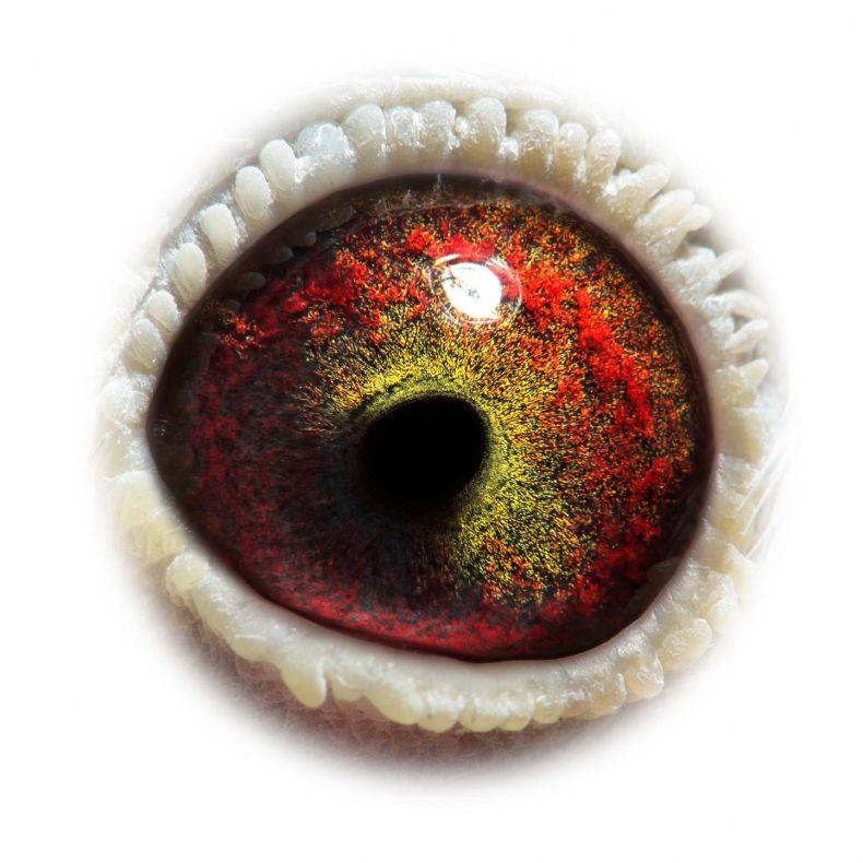 NL17-1732524_eye