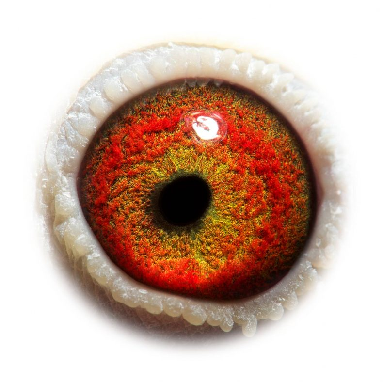 NL17-1732528_eye