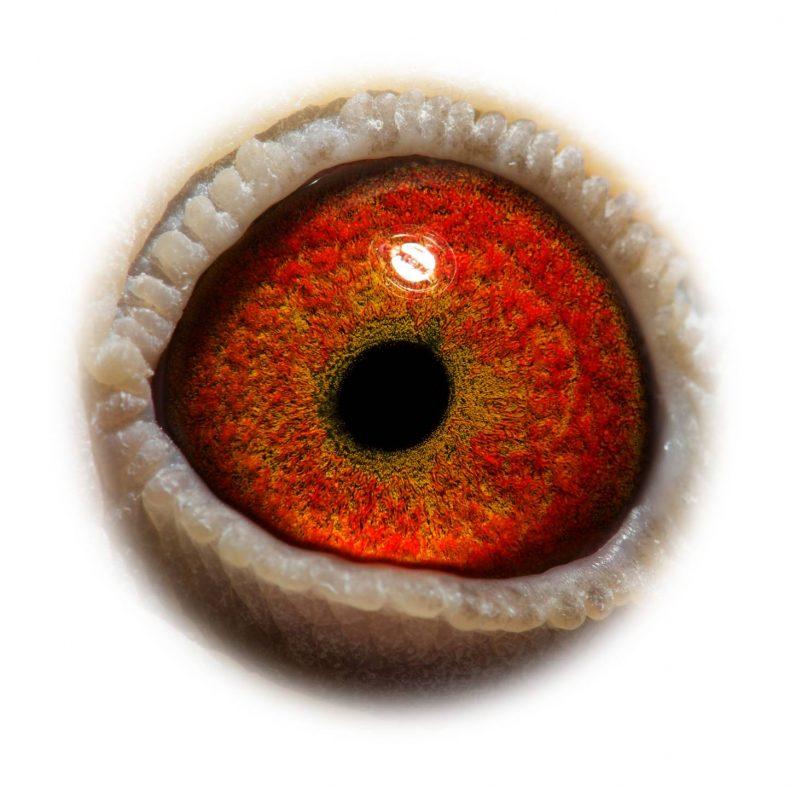NL17-1732531_eye
