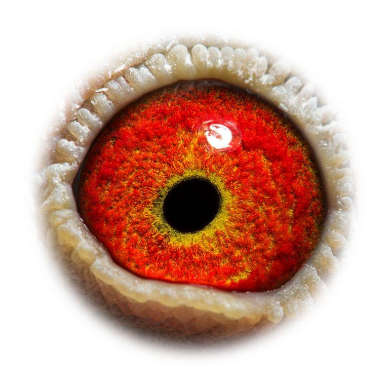 NL17-1732533_eye