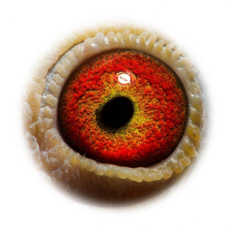 NL17-1732563_eye