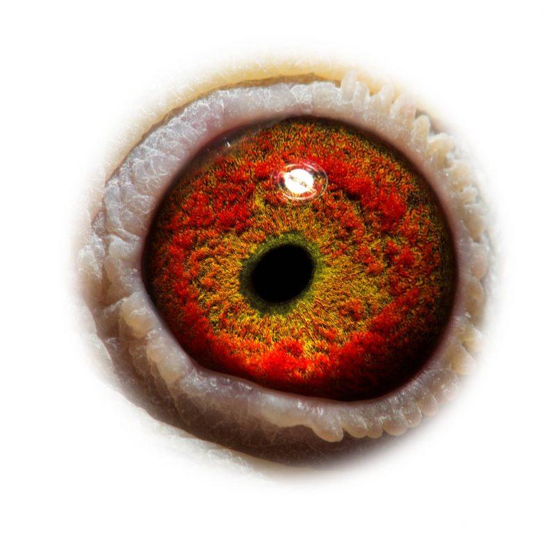 NL17-1732733_eye