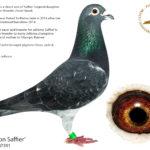 Last-Son-Saffier
