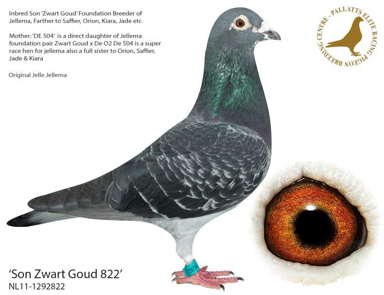 Son-Zwart-Goud-822