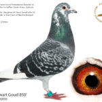 Son-Zwart-Goud-850