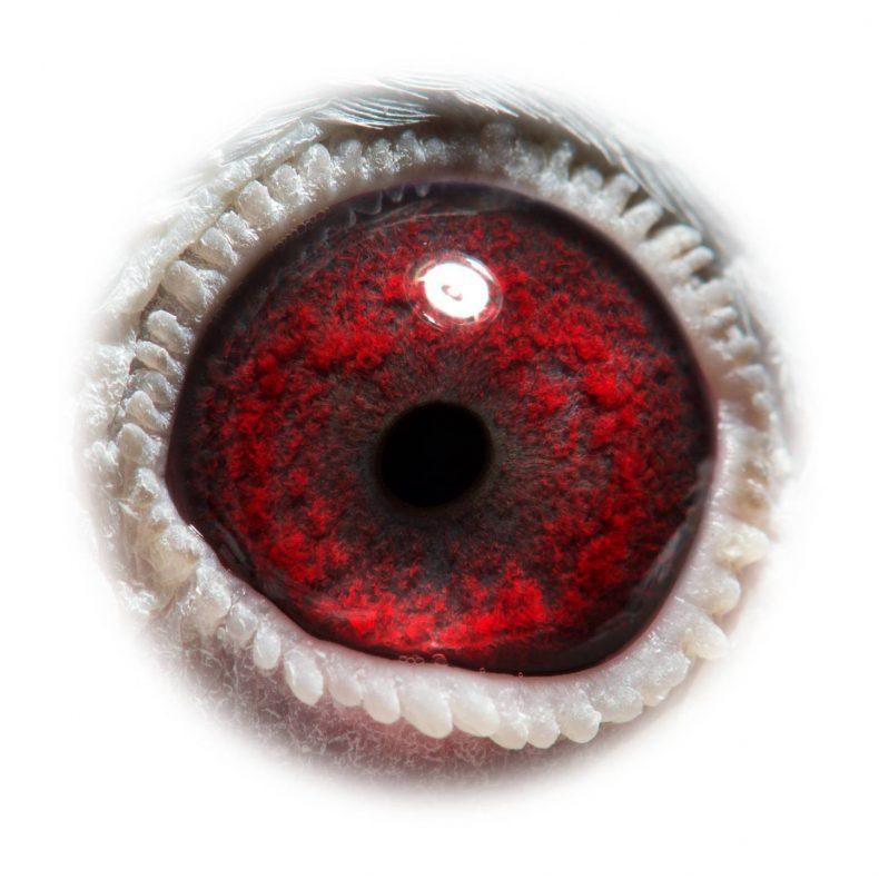 NL18-1542209_eye