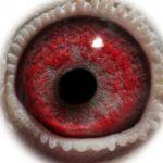 NL18-1542235_eye