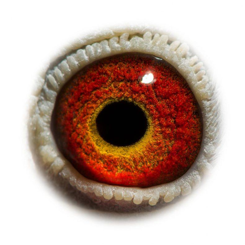 NL17-1732534_eye