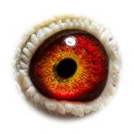 NL14-1559930_eye_asset