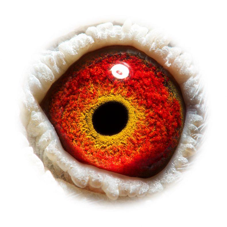 NL15-1211725_eye_asset